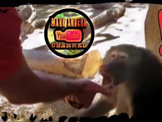 Baboon Magic Trick