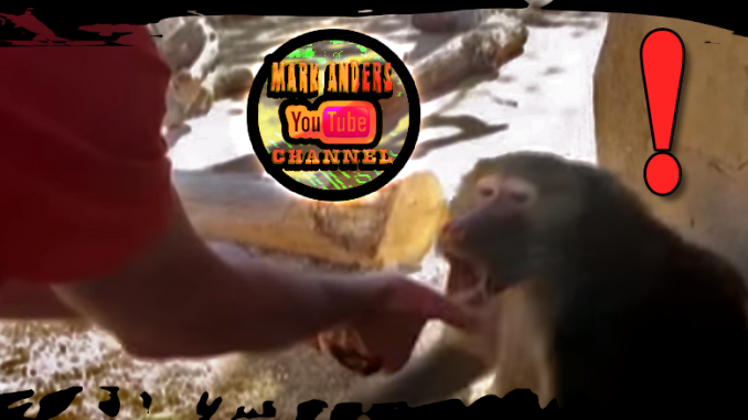 Baboon Magic Trick