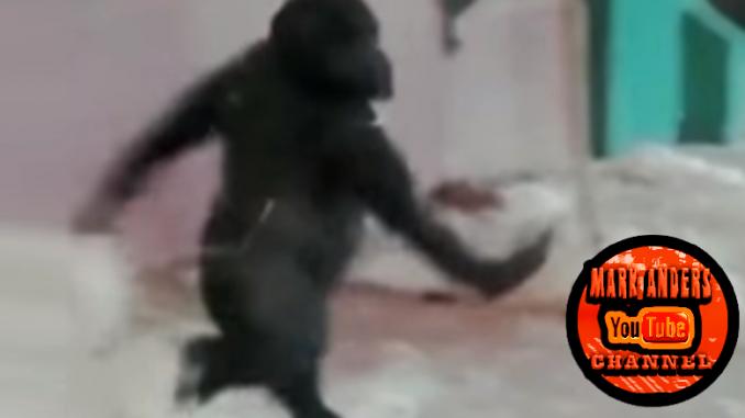 Ballet Gorilla