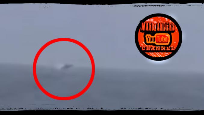 Chesapeake Bay Whale