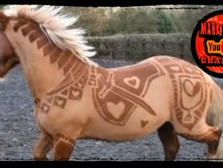 Horse Hairdresser
