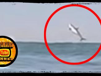 Huntington Beach Shark