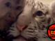 Monkey Tiger Selfie