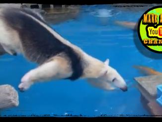 Persistent Anteater