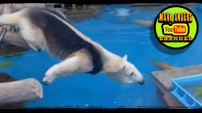 Persistent Anteater