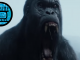 Tarzan Gorilla