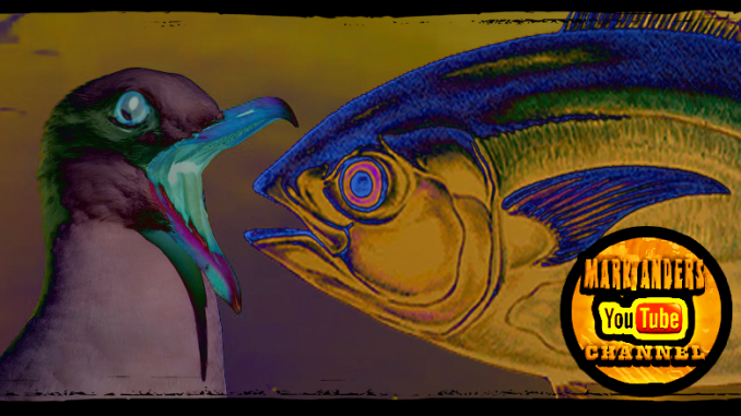 Tuna Eats Seagull