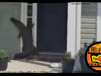 Alligator Smacks Doorbell