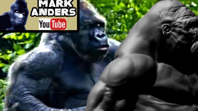 bald-gorilla